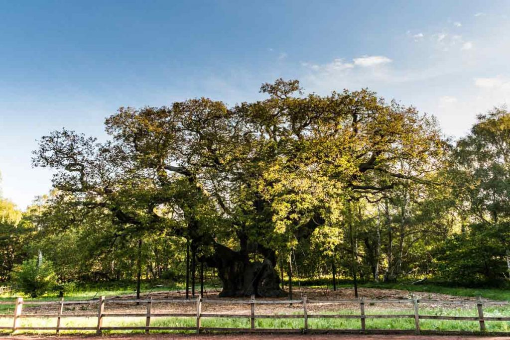Follow our guide to Nottingham to visit Sherwood Forest
