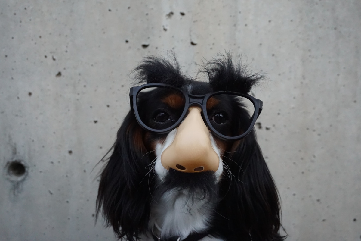 A dog wearing a disguise